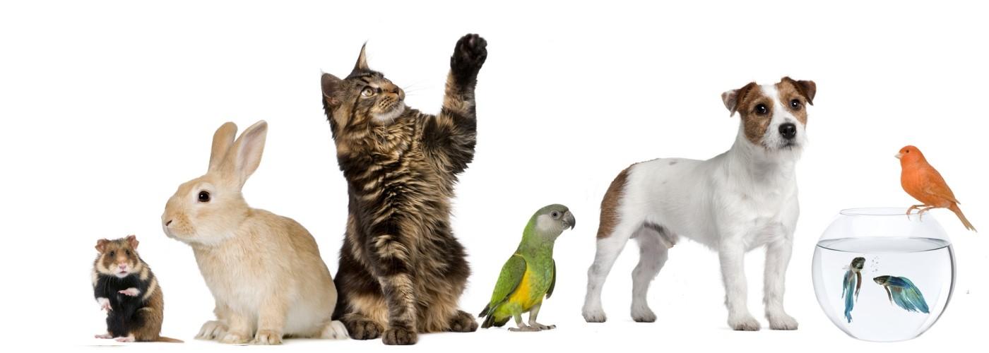 Facturatie voor dierenartsen
